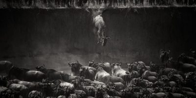 Foto: Nicole Cambré /National Geographic 2014 Photo Contest