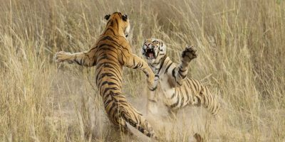 Foto: Archna Singh / National Geographic 2014 Photo Contest