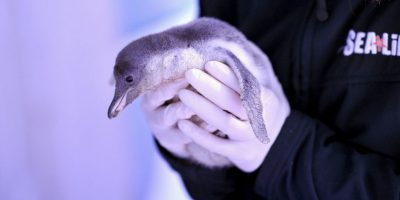 Turistas podrían causar grave daño en la Antártida