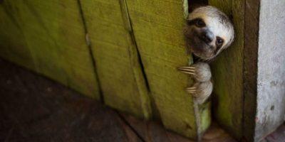 GALERÍA. Las fotos más curiosas de animales del 2014