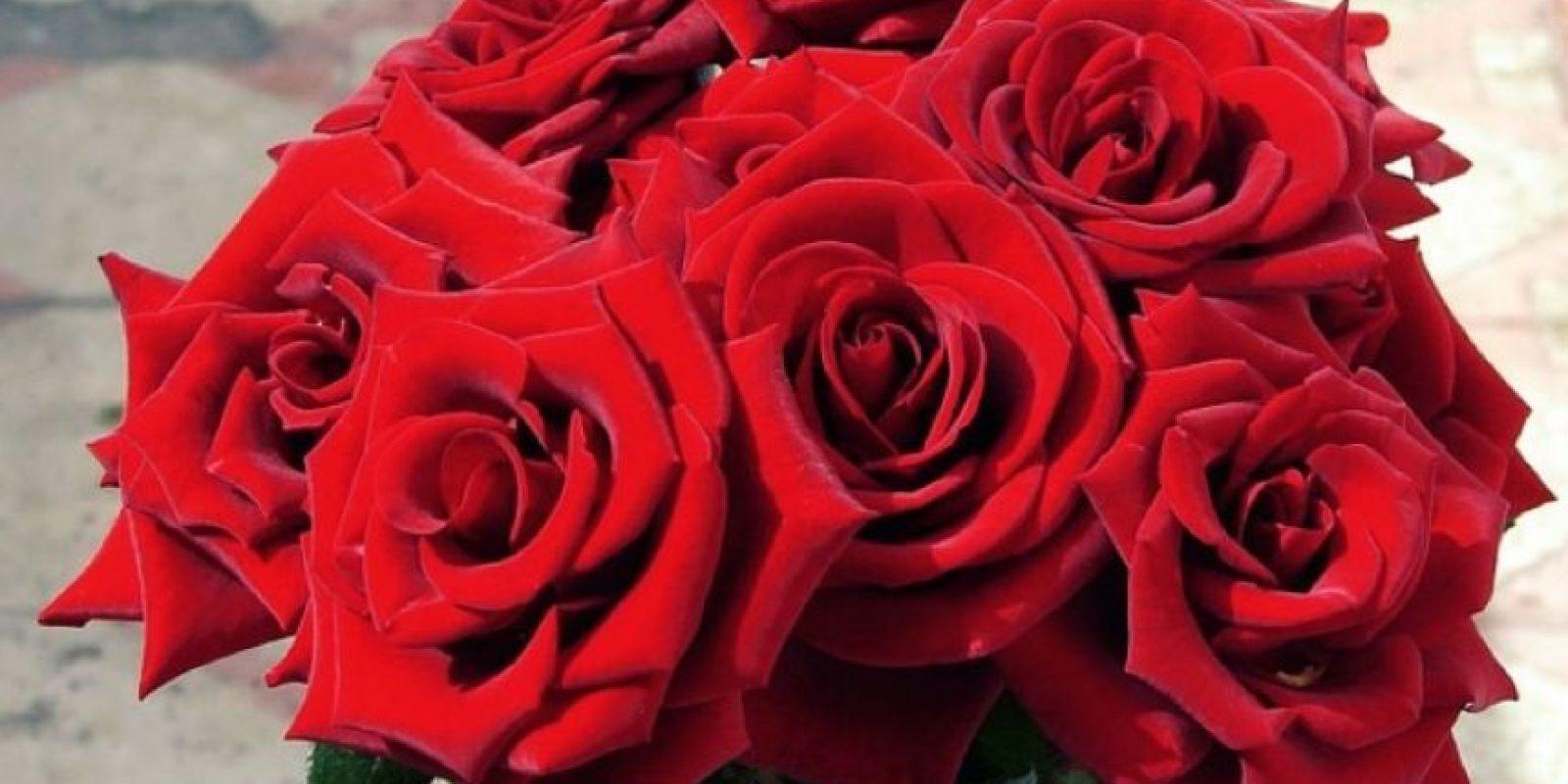Leo Del 23 de julio al 23 de agosto (elemento: fuego). Durante todo el año, te recomiendo tener rosas rojas y flores azules. Eso va a potenciar la energía del amor en tu vida. Foto:Pinterest