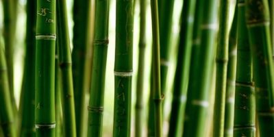 Virgo Del 24 de agosto al 23 de septiembre (elemento: tierra). Coloca un bambú cerca de la puerta de entrada de tu casa, eso te ayudará a protegerla y alejar los problemas. Coloca un listón rosa amarrado en la base del bambú si quieres mucho amor y un rojo si quieres mucho sexo. Foto:Flickr