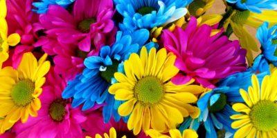 Acuario Del 21 de enero al 18 de febrero (elemento: aire). Llena de flores de todos colores tu casa, procura hacerlo todos los primeros de cada mes y verás que durante ese mes, además de atraer fortuna, el amor vendrá a ti inevitablemente. Foto:Pixabay