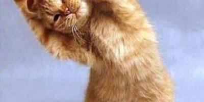 FOTOS. Estos tiernos animales te enseñarán cómo hacer yoga