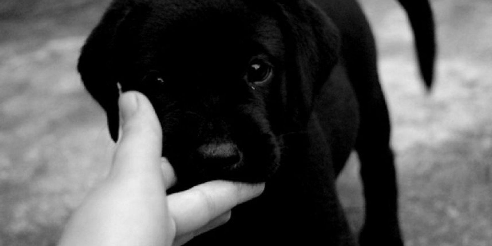 2. Medicarlos también es una alternativa. Pero sobre esto el veterinario advierte que no hay que darles cualquier fármaco porque algunos son nocivos si tienen ciertas afecciones. Foto:Tumblr.com/Tagged-perros