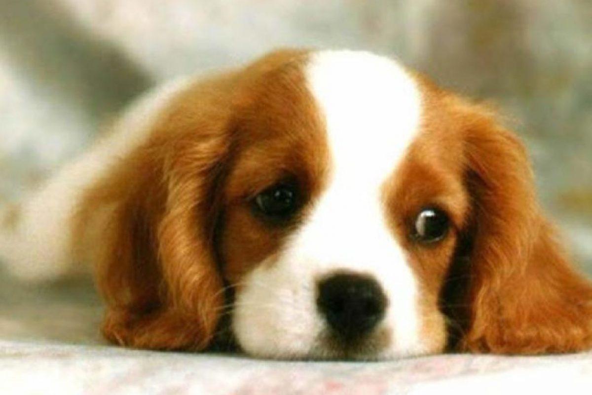 Foto:Tumblr.com/Tagged-perros