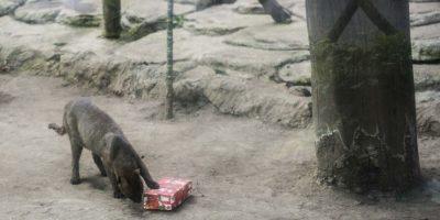 Los animales recibieron regalos. Foto:Oliver de Ros