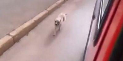 ¡Conmovedor! Perro persigue a la ambulancia que se llevó a su dueño
