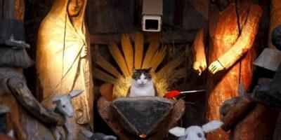 El gato como centro Foto:Reddit