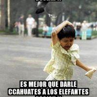 Foto:Tumblr.com/Tagged-aves-memes