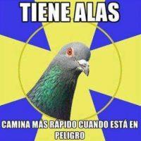 Buena reflexión… Foto:Tumblr.com/Tagged-aves-memes