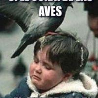 ¡Oh, no! Foto:Tumblr.com/Tagged-aves-memes