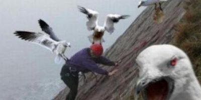 Seguramente nunca pensaron que fueran tan agresivas. Foto:Tumblr.com/Tagged-aves-memes