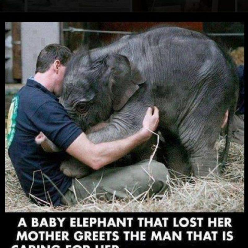 La bebé elefante perdió a su madre, pero ganó un amigo Foto:Vía Facebook.com/BoredomTherapy