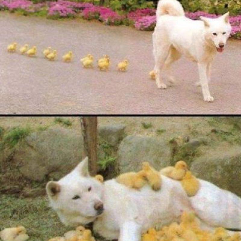 Una hermosa convivencia Foto:Vía Facebook.com/BoredomTherapy