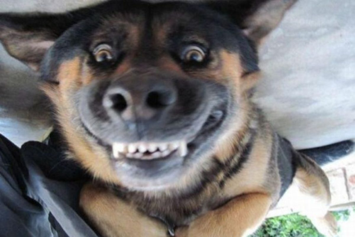 A cualquiera le cae bien con esa cara Foto:Pinterest