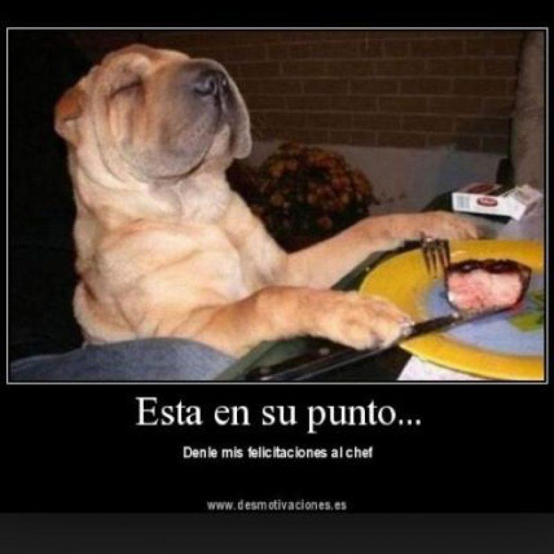 Foto:Tumblr.com/Tagged-perro-simpático