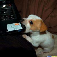 ¿Le hará daño a la computadora? Foto:Know Your Meme