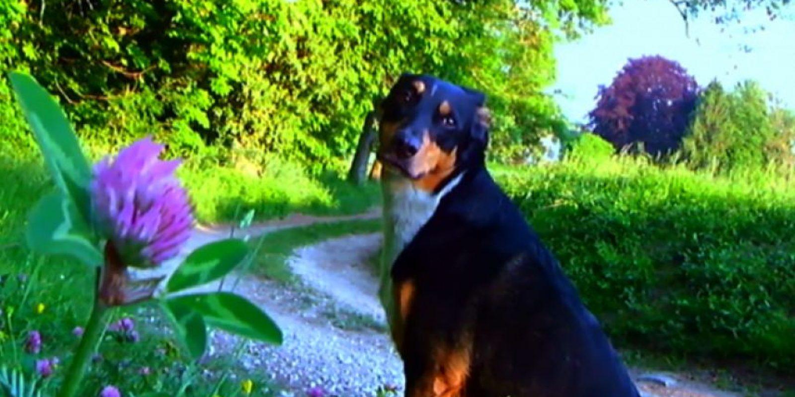 Foto:butacaancha.com