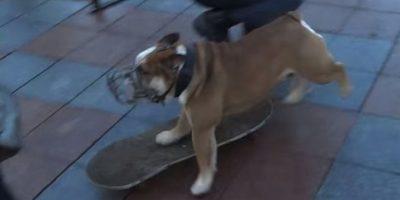 VIDEO: Perro hace skate durante una manifestación en Ucrania