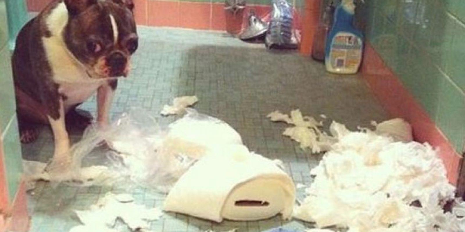Siempre le ha gustado el papel higiénico… Foto:Tumblr.com/Tagged-perros-desastre