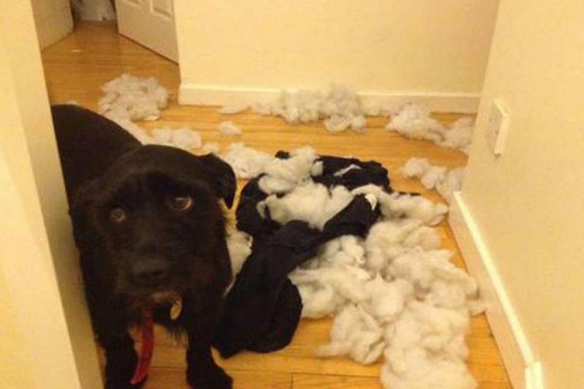 ¿Otra vez lo mismo? Foto:Tumblr.com/Tagged-perros-desastre