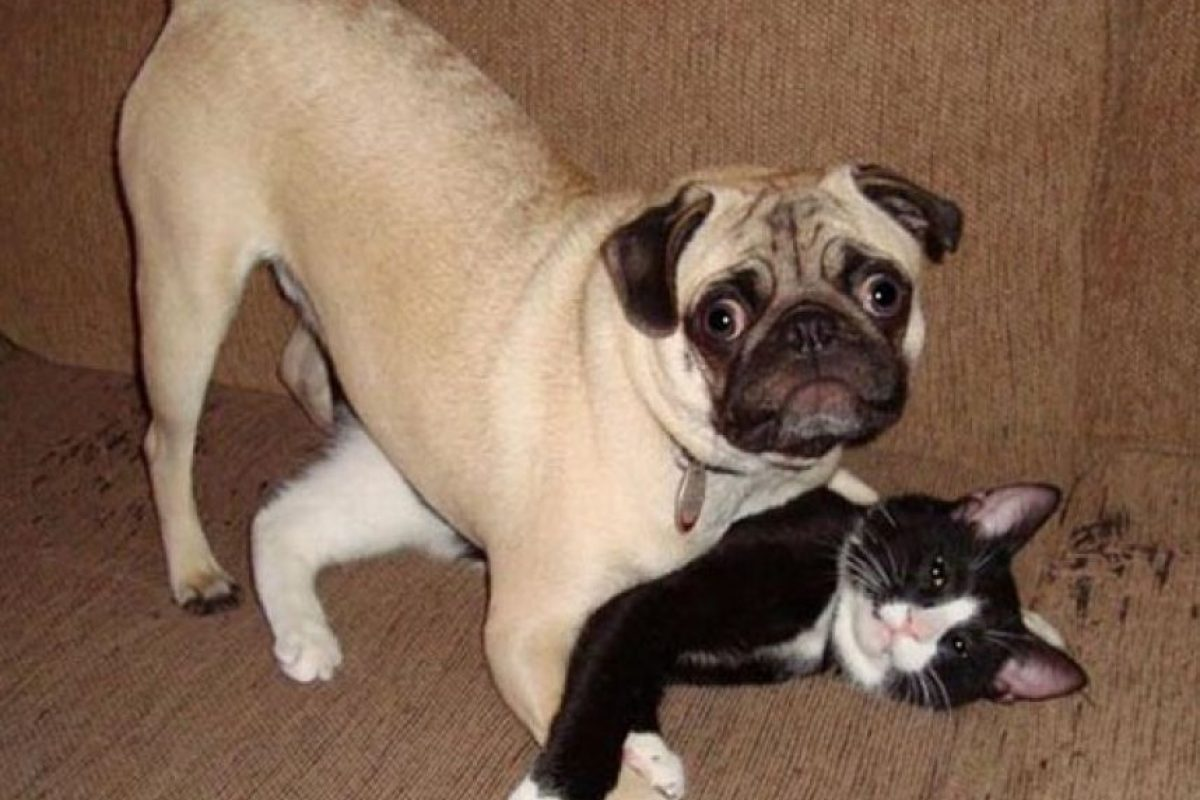WTF! Foto:Tumblr.com/Tagged-perros-desastre