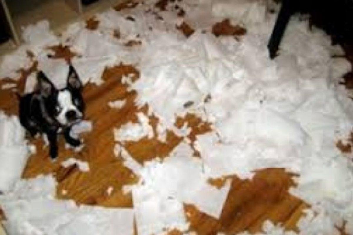 ¡Un total desastre! Foto:Tumblr.com/Tagged-perros-desastre