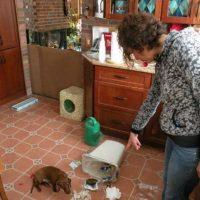 Foto:Tumblr.com/Tagged-perros-desastre