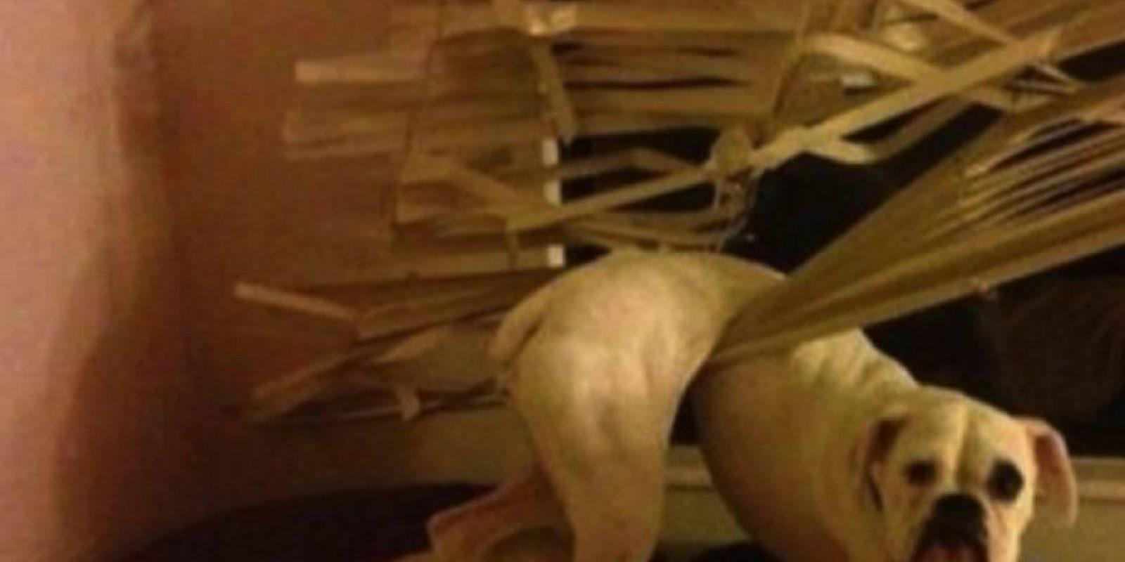 Le encantan las persianas… Foto:Tumblr.com/Tagged-perros-desastre