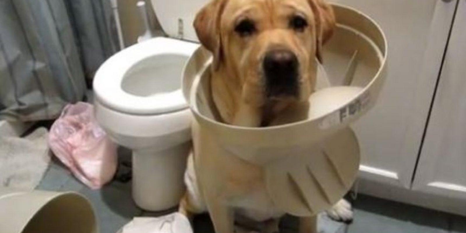 ¡Ni cómo evitar ser acusado! Foto:Tumblr.com/Tagged-perros-desastre