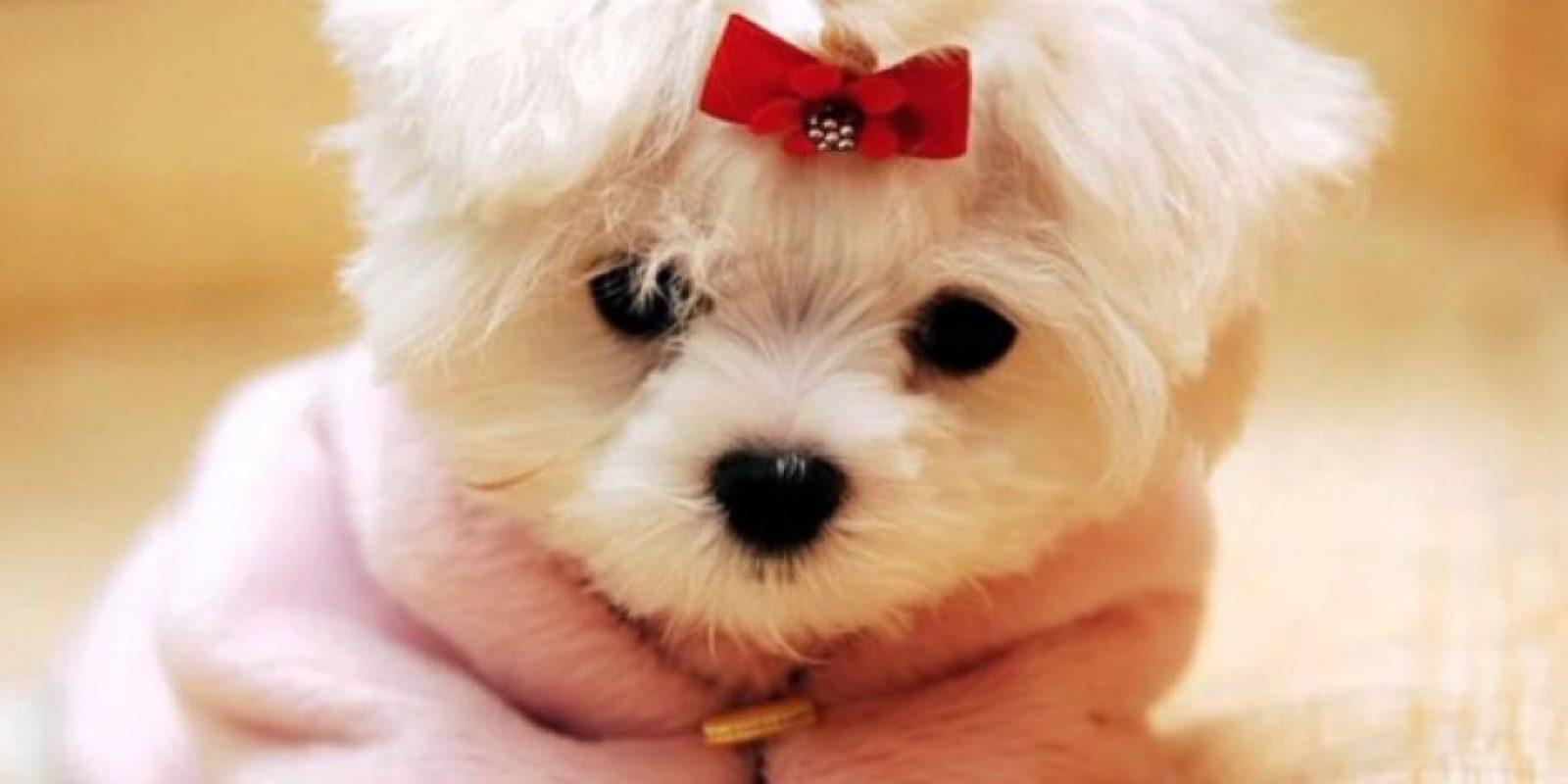 Hermosa y tierna Foto:Tumblr.com/Tagged-perritos-adorables