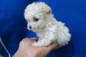 Foto:Tumblr.com/Tagged-perritos-adorables