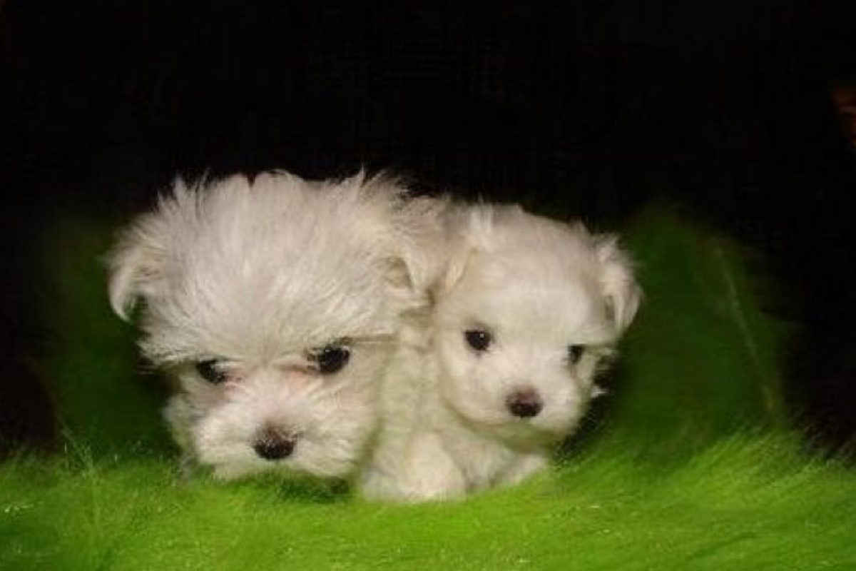 Foto:Funy Pets