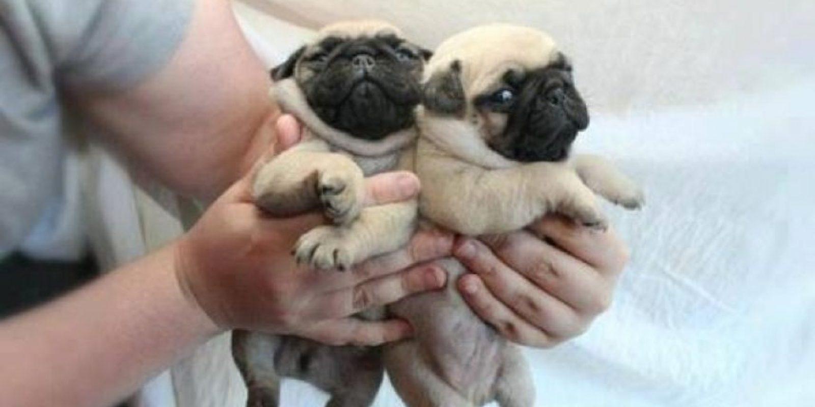 ¡No hhay nada más tierno! Foto:Tumblr.com/Tagged-perritos-adorables
