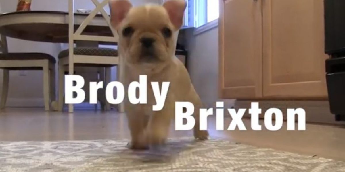 VIDEO: ¡Adorable! Brody el cachorrito más inteligente de internet