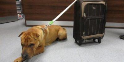 """Abandonan a un perro con """"sus pertenencias"""" en una estación de trenes en Reino Unido"""