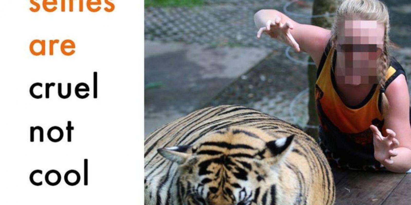 Estas imágenes representan una vida llena de crueldad para el animal Foto:Facebook/World Animal Protection