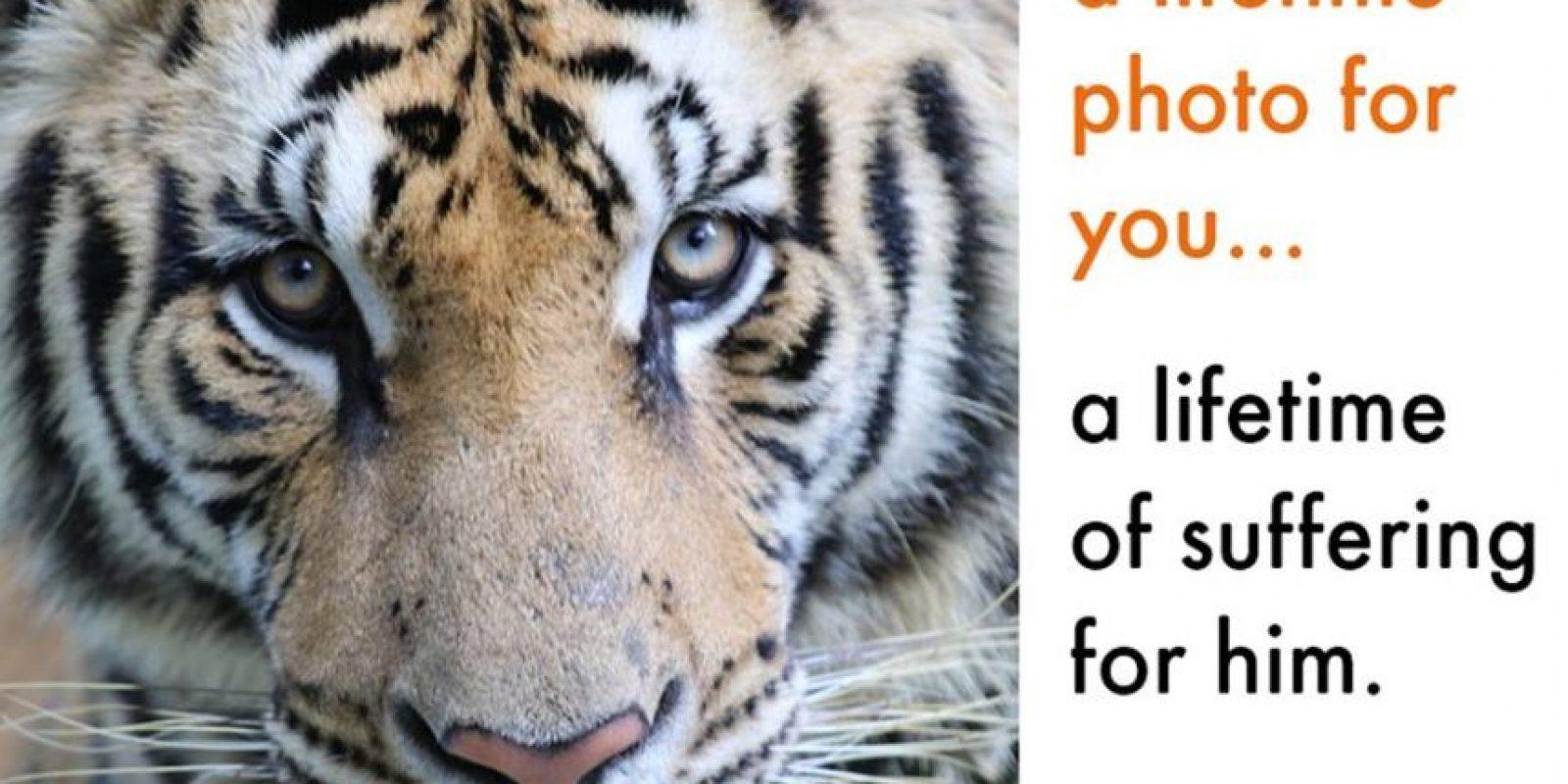"""""""Una foto en tu vida, es una vida de sufrimiento para ellos"""". Foto:Facebook/World Animal Protection"""