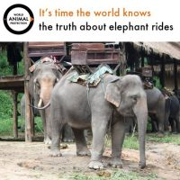 Foto:Facebook/World Animal Protection