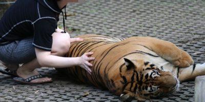 Por ello, esta fundación recomienda no contribuir al entretenimiento con animales Foto:Facebook/World Animal Protection