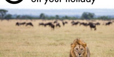 También hay leones Foto:Facebook/World Animal Protection