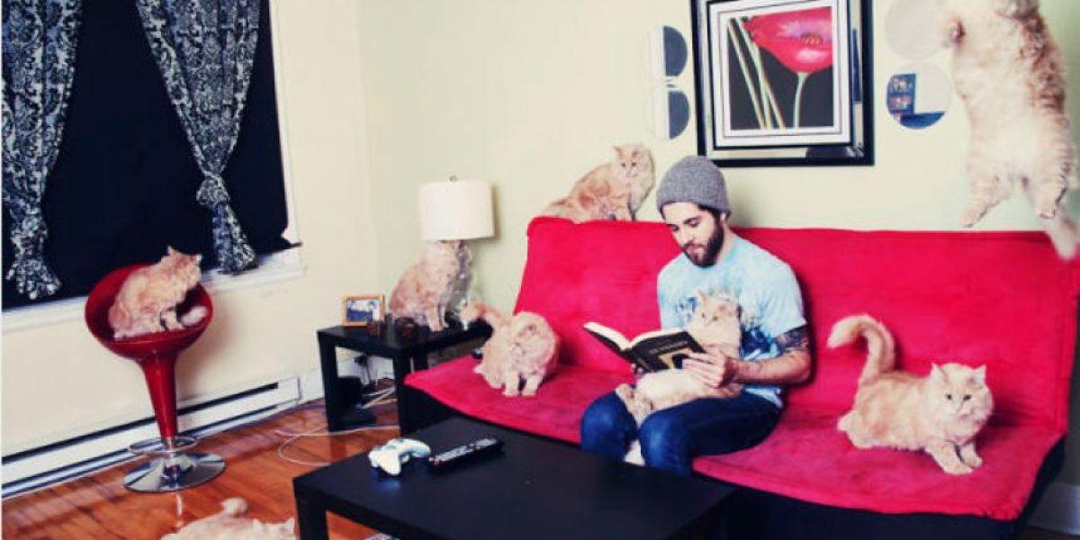 Fotos. Amar a un gato es divertido