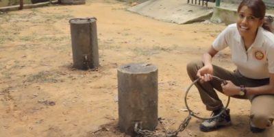 Los amarran al suelo con cadenas que apenas y los dejan caminar. Foto:YouTube/ World Animal Protection