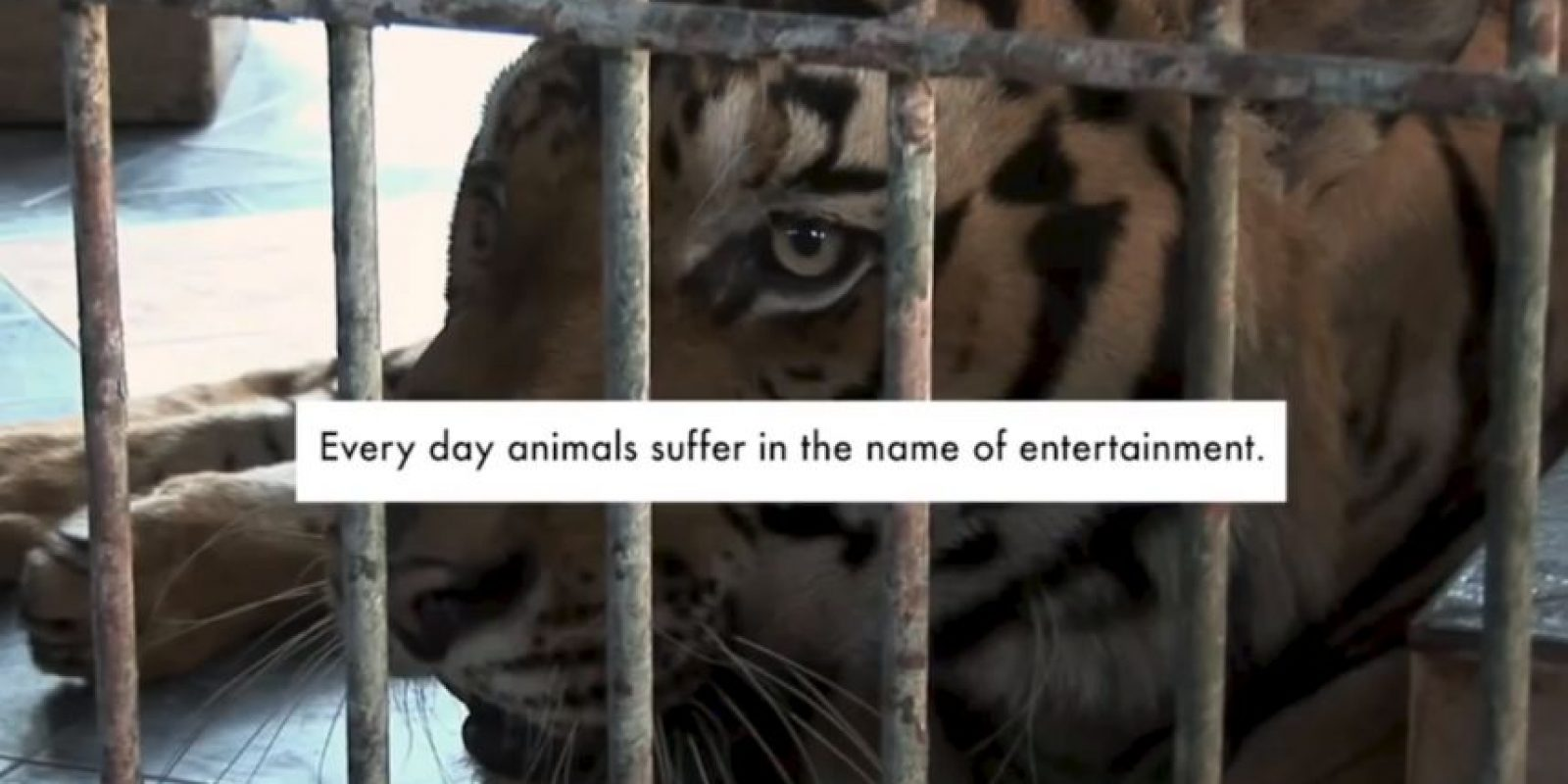 """Cada día un animal sufre en nombre del entretenimiento"" Foto: YouTube/ World Animal Protection"