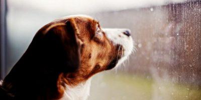 FOTOS. 10 cosas que no sabías que los perros pueden predecir