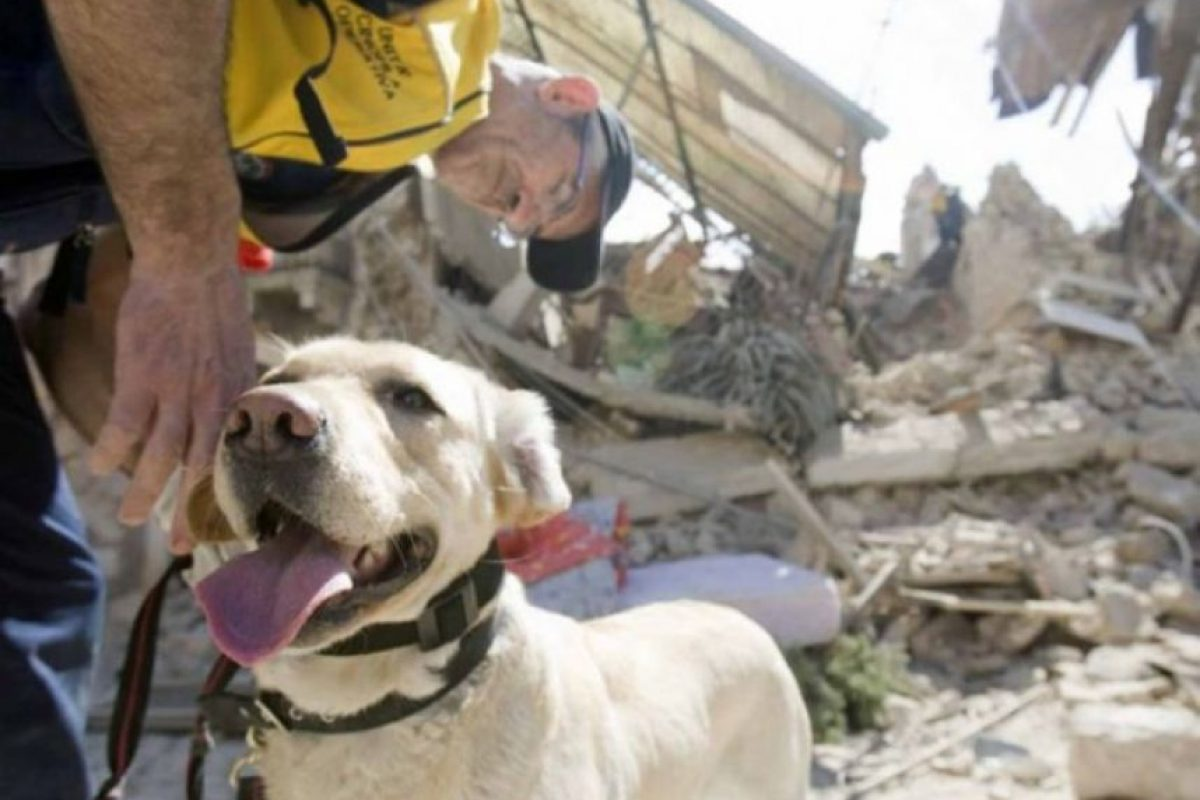 Son capaces de detectar temblores Foto:Shutter