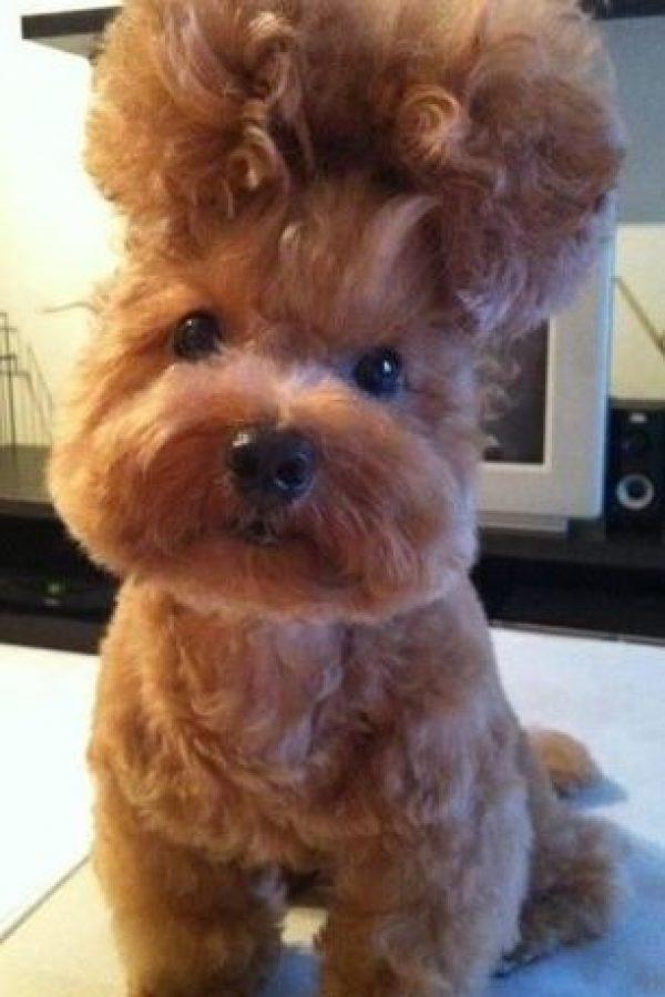 ¡Todo menos un perro saliendo de la estética canina! Foto:Reddit