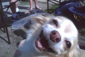 ¡Súper sonriente! Foto:Tumblr.com/tagged-animales-wtf