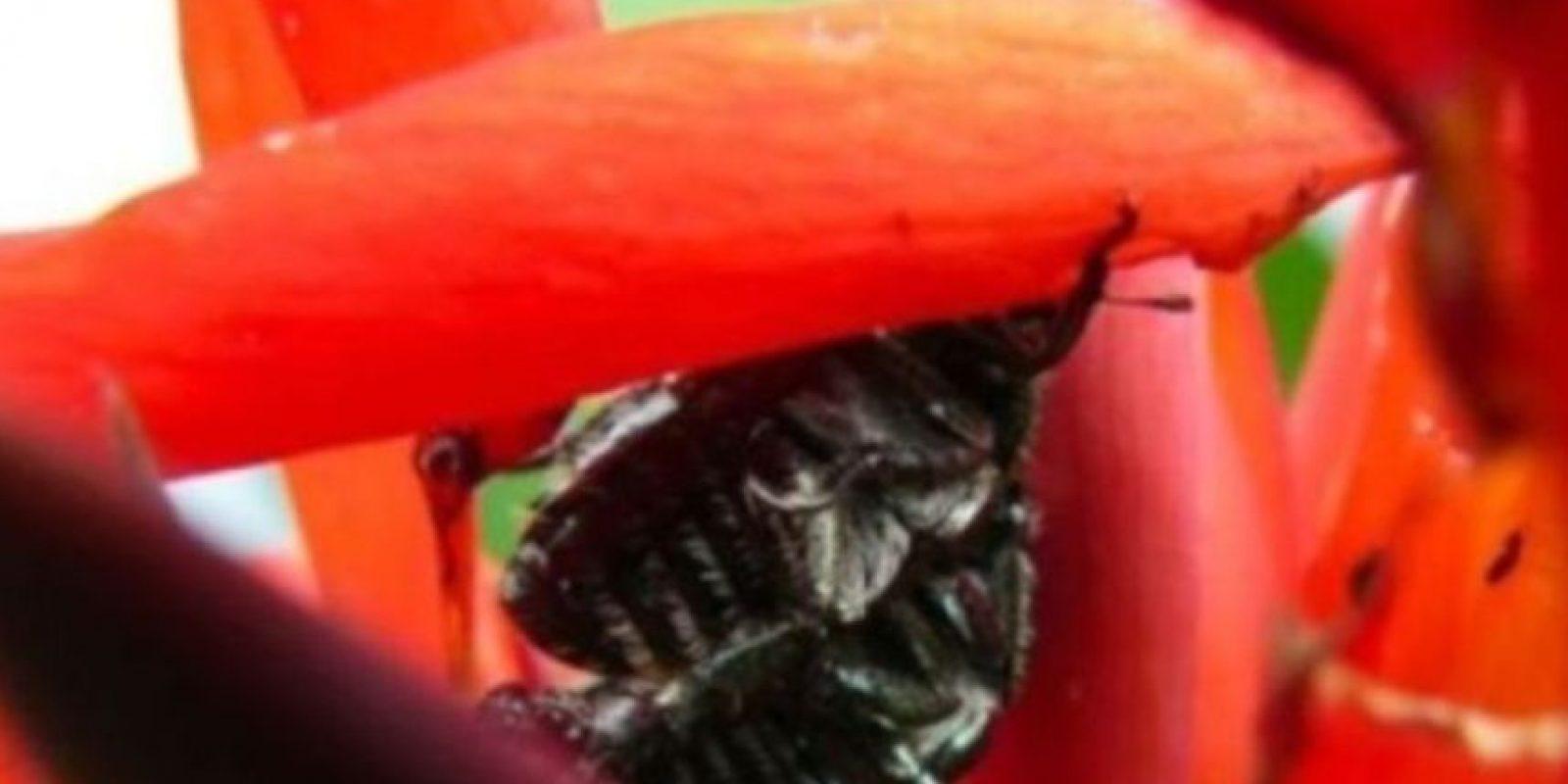 Los escarabajos hacen lo mismo. Foto:Getty